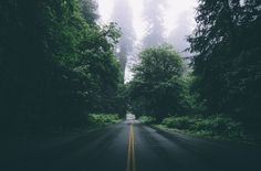 road  forest  calm  beauty  sky  world