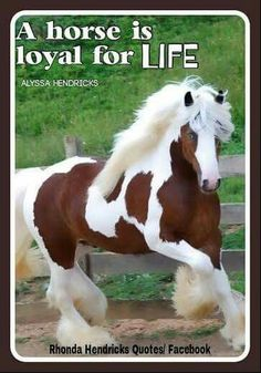 """Gorgeous Gypsy Vanner Horse of the most fabulous animals in the kingdom"""" - hahaha!Gorgeous Gypsy Vanner Horse of the most fabulous animals in the kingdom"""" - hahaha! All The Pretty Horses, Most Beautiful Horses, Cute Horses, Horse Love, Rare Animals, Animals And Pets, Funny Animals, Strange Animals, Adorable Animals"""