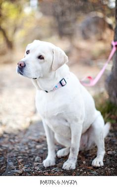 Sweet... looks like our yellow lab