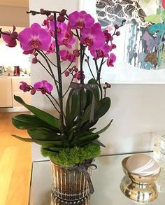 Orchids – Home Decor Gardening Flowers Orchids In Water, Indoor Orchids, Orchids Garden, Indoor Plants, Flowers Garden, Potted Plants, Growing Orchids, Growing Flowers, Planting Flowers