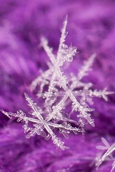 The Beauty of the Snowflake by Kathy~ on Flickr