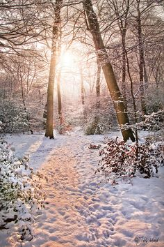 Frosted Light - Winter Woodland, photo by Jack Hood. I Love Winter, Winter Snow, Winter Time, Winter Christmas, Winter Magic, Winter Scenery, All Nature, Snow Scenes, Winter Beauty