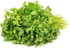July 06 2020 at 03:40AM Fresh Coriander, September 28, Chill, Herbs, Herb