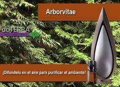 Usa el aceite esencial arborvitae en el difusor para purificar el aire