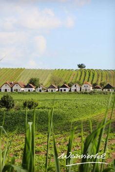 Nirgends ist der Wein präsenter als im Weinviertel. Waren die Weinkeller der Kellergassen früher Produktions- und Lagerstätten des Weines, so wird der Wein heutzutage meist direkt in den Weingütern gekeltert. An vielen Orten werden die Kellergassen aber weiterhin liebevoll gepflegt und zu besonderen Anlässen wieder zum Leben erweckt. Erlebbar sind die Kellergassen bei Kellergassenführungen, geselligen Weinfesten und  vielen weiteren tollen Erlebnissen. Jetzt informieren! © Weinviertel… Austria, Vineyard, Outdoor, Instagram, Wine Festival, Bike Rides, Hiking Trails, Tourism, Road Trip Destinations