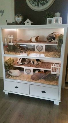 Not for guinea pigs but cute for hamsters or gerbils