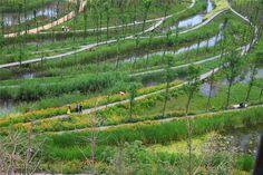 Minghu Wetland Park - Turenscape. Liupanshui, Guizhou Province, China, Setembro 2009 - Abril 2011 (concurso) e Agosto 2018 (conclusão).