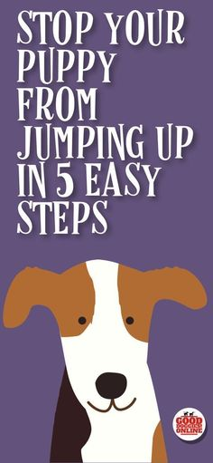 The puppy training tips are here to help you stop your puppy from jumping up, whether it's jumping on people, jumping on the couch, the bed or other furniture, or jumping up on walks, these dog training tips will help you with your new puppy. #puppy #pupp #puppytraining #doghelp #trainpuppies #puppytrainingtips