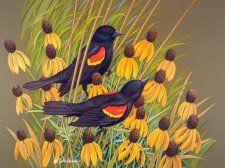 """Redwinged Blackbirds"""