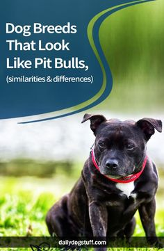 Mesmerizing Training Your Dog Proven, Useful Hints And Tips Ideas. Remarkable Training Your Dog Proven, Useful Hints And Tips Ideas. Pitbull Facts, Coconut Oil For Dogs, Dog Shaming, Bull Terrier Dog, Old Dogs, Pit Bulls, Dog Training Tips, Dog Life, Dog Breeds