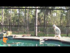 http://www.Fine-tunedCanines.com http://www.facebook.com/FinetunedCanines Real-world dog training with distractions - Naples Florida dog training