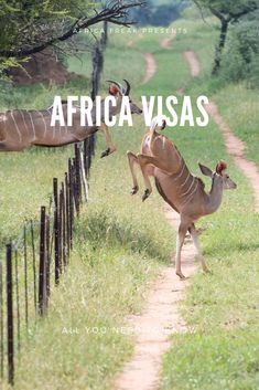 From the chance to see the big five on a South African safari to the privilege to summit Mt Kenya – there are so many unforgettable memories to create in Africa. Once you've arrived, the world is your oyster. But first, you need to finalize your passport to Africa. For the sake of summary, this article discusses the visa requirements for U.S. citizens. Here is a basic overview of the general requirements. #travel #Africa #destinations #passport #visas #documents #requirements #costs #tips