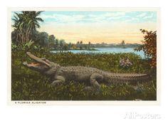 Florida Alligator Poster bei AllPosters.de