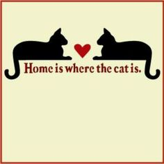 Home Is Where The Cat Is makes a delightful sign for cat lovers -- from The Artful Stencil Crazy Cat Lady, Crazy Cats, Cute Cats, Funny Cats, Cats Humor, Funny Horses, Adorable Kittens, Funny Animal, Black Cat Art