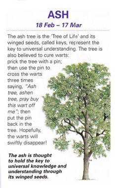 Celtic Tree Astrology – Ash
