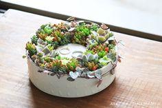 長崎の波佐見焼h+の器を使った多肉植物リングピロー