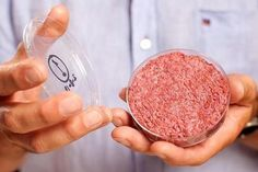 The world's first beef burger created from stem cells has a texture that's closer to cake than steak. Hamburgers, Animal Agriculture, Petri Dish, Food Industry, Stem Cells, Steak, At Least, Food Science, Barbecue