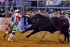 Level 5 Courage is hard to describe and harder to recognize. To understand it, look to the rodeo Cowboy Horse, Cowboy And Cowgirl, Baby Wolves, Red Wolves, Rodeo Events, Professional Bull Riders, Houston Rodeo, Rodeo Cowboys, Rodeo Life