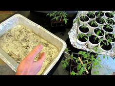 60 Seconds or Sow: How to Use Foil Trays for Easy Garden Plant Management - The Rusted Garden 2013