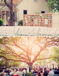 it's been decided, where i find a tree like this, my wedding will be :)