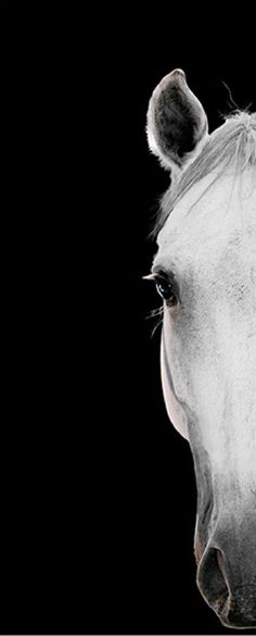 Half a horse head on black. Bob TaborUntitled (26_FINAL_)183 x 73 cm