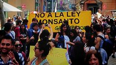 Chile fights GMO in national protest against 'Monsanto law' (PHOTOS, VIDEO) Aug 18, 2013