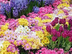 Hoje temos uma variedade imensa de flores. O cultivo de flores evoluiu demais e conta com tecnologias e técnicas incríveis para que as noivas não precisem mais sofrer com a escolha das flores – sua flor predileta poderá SEMPRE ser usada