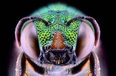 Yudy Sauw insect photos | Yudy Sauw, installé en Indonésie, photographie les insectes entre ...
