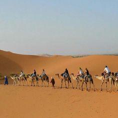 Follow the leader leader  There's no need for taxis while in Morocco's Sahara.  The word 'sahara' means 'desert' in #Arabic so the Sahara Desert is the 'desert desert'  Photo taken by @pinthemapproject  #Dubai #India #arabian #Photography #Delhi #Mumbai #Kolkata #Rajasthan #Pakistan #UAE #burjkhalifa