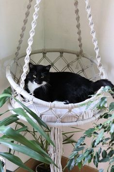 ✔ 10 top creative diy basket for cat to your home 30 – … - Katzen Crazy Cat Lady, Crazy Cats, Cat House Diy, Gatos Cats, Cat Room, Pet Furniture, Pet Beds, Cat Life, Cats And Kittens
