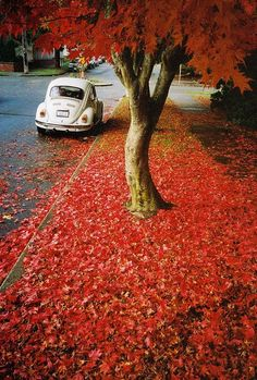 Punch buggy white no punch back. Mercedes Auto, Beetle Bug, Vw Beetles, Autumn Scenery, Vw Cars, Buggy, Cute Cars, Love Bugs, Image Hd