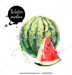 Hand drawn watercolor painting on white background. Vector illustration of fruit watermelon