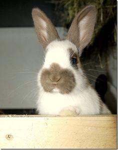 Ist Ihr Kaninchen fit für den Frühling?