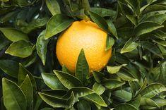 fresh orange juice inspires me to make wonderful salad dressings...a sweet foundation for tahini, garlic, fresh herbs...yum!