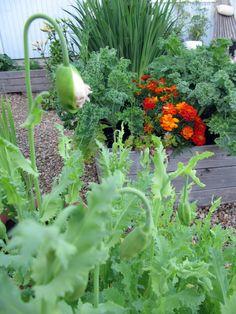 puutarha / Kipparin morsian