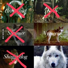 Hold the door, but remember the Direwolves