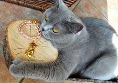 KOT British cat shorthair http://bizuteria-marzen.sstore.pl/