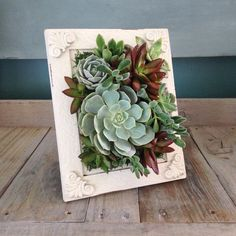55 creative DIY succulents ideas for you - Page 28 of 55 - Pflanzen Succulent Frame, Vertical Succulent Gardens, Succulent Wall Art, Succulent Gardening, Succulent Arrangements, Container Gardening, Succulent Ideas, Succulent Decorations, Kitchen Gardening