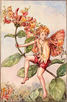 """Vintage print 'The Honeysuckle Fairy' by Cicely Mary Barker from """"The Book of the Flower Fairies""""; Poem and Pictures by Cicely Mary Barker, Published by Blackie & Son Limited, London [Flower Fairies - Summer] Cicely Mary Barker, Honeysuckle Flower, Honeysuckle Cottage, Kobold, Fairy Pictures, Vintage Fairies, Vintage Art Prints, Beautiful Fairies, Flower Fairies"""
