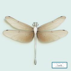 Post Natural History by Vincent Fournier - Dragonfly Metallic Bodies, Dying Of The Light, Different Kinds Of Art, Dragonfly Tattoo, Dragonfly Wings, Trends Magazine, Beautiful Bugs, History Projects, Photography Illustration