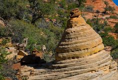 The East Side!!! ....of #ZionNationalPark . #Sheep and #Hoodoos are everywher...