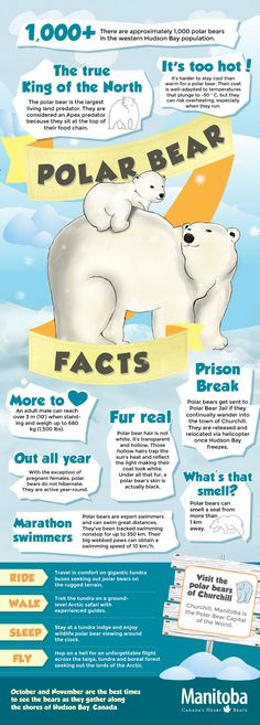 Polar Bear Infographic. #PolarBearWeek