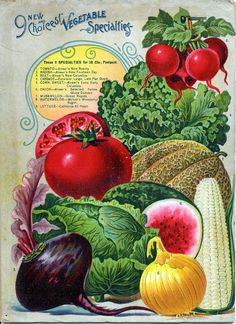 Seed Catalogs from Smithsonian Institution Libraries - Alneer Brothers, Seed and Plant Catalogue, 1898