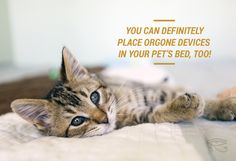 Weird But Effective Charging Abilities That Orgone Devices Have - Did you know that you can place orgone devices in your pet's bed?  Check out the other things you can charge with an orgone device. via - torgone.com