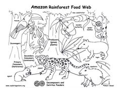 food chain coloring pages | Higher Resolution PDF for Downloading