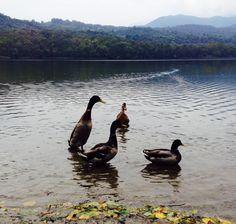 Un giorno al lago