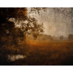 Landscape photography dark rustic dreamy woodland autumn forest trees... ($20) ❤ liked on Polyvore featuring home, home decor, backgrounds, fall home decor, autumn home decor, rustic home accessories, rustic home decor and forest home decor
