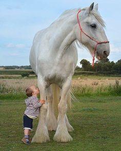 281 gilla-markeringar, 6 kommentarer - I ❤️ horses Big Horses, Cute Horses, Pretty Horses, Horse Love, Beautiful Horses, Animals Beautiful, Animals For Kids, Animals And Pets, Funny Animals