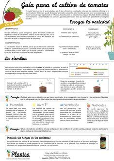 Cómo cultivar #tomates, guía completa #huerto.