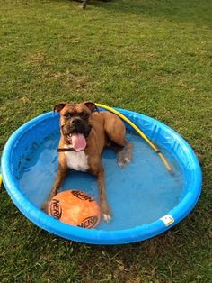 Axel's in the Pool